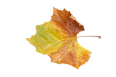 Autumn colors in a leaf Stock Photo