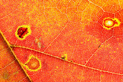 Autumn colors leaf detail royalty free stock photo