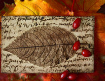 Autumn colors - leaf & hawthorn Royalty Free Stock Image