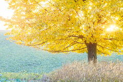Autumn colors, leafy tree stock image