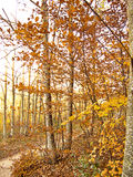 Autumn colors in leaves Stock Photo