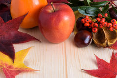 Autumn colors, leaves - berries and fruit Stock Image