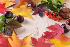 Autumn colors, leaves - berries and fruit Royalty Free Stock Photography