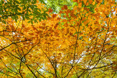Autumn colors on leaves Royalty Free Stock Photo