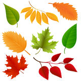 Autumn colors leaves set. On white background. Vector illustraton Royalty Free Illustration