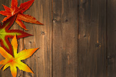 Autumn colors. Leaves on wood Royalty Free Stock Image