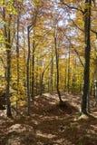 Autumn colors in Liguria Stock Images