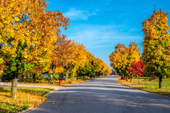 Autumn colors line a street. In Munster, Indiana stock photo