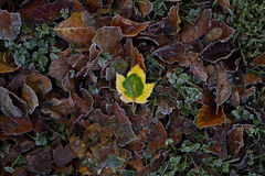 Leaves in Autumn colors Royalty Free Stock Images