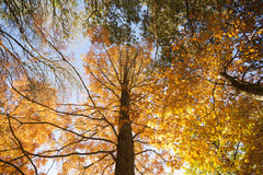 Autumn colors. Royalty Free Stock Image