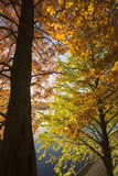 Autumn colors. Stock Images