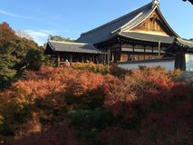 Autumn colors of maple trees in front of tofukuji temple in Kyoto. On a sunny day Royalty Free Stock Photography