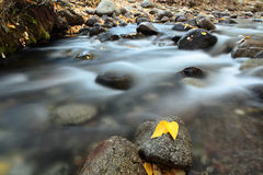 Autumn Colors of McGee Creek, California Royalty Free Stock Photos
