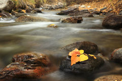 Autumn Colors of McGee Creek, California Stock Image