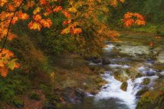 Autumn Colors on McKenzie Pass-Santiam Pass Scenic Byway. Falls colors reflecting light from light rain along the waters of the South Santiam River on the Royalty Free Stock Photo