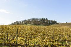 Fall Colors of Mid Willamette Valley Vineyards in Western Oregon Royalty Free Stock Image
