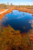 Autumn colors mire landscapes Royalty Free Stock Photography