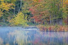 Autumn Colors And Misty River royalty-vrije stock afbeelding
