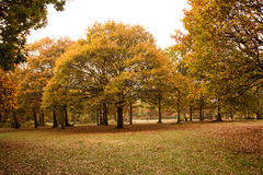 Autumn colors, mostly oak trees Royalty Free Stock Photography