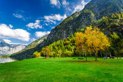 Autumn colors in the mountain forest Stock Image