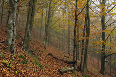 Autumn colors in a mountain forest Royalty Free Stock Photos