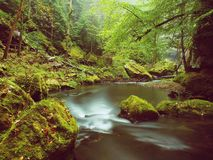 Autumn colors at mountain river banks. Fresh green mossy boulders on river banks Stock Photo