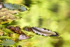 Autumn colors in mountain stream. Stock Photos