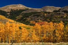 Autumn Colors in the Mountains of Colorado. Aspens changing colors in the mountains near Breckenridge, Colorado Royalty Free Stock Photos
