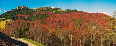 Autumn colors in the mountains. Fall colors in the Ciucas mountains, Bratocei rocks, Sphinx rocks, Fangs rocks. Brasov county, Romania. 1720m stock photos