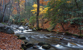 Autumn colors, mountains stream Royalty Free Stock Images