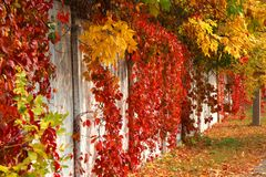 Autumn colors of nature Stock Photo