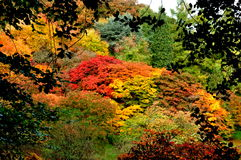 Autumn Colors - nature's canvas Stock Photos