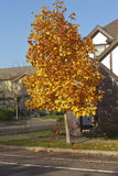 Autumn colors in a neighborhood Oregon. Royalty Free Stock Photo