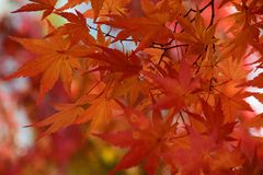 Autumn Colors in Nikko, Japan Royalty Free Stock Photo
