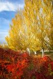 Autumn Colors no parque foto de stock