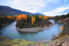 Autumn colors  Northern British Columbia river Royalty Free Stock Image