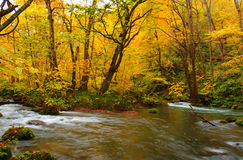 Autumn Colors of Oirase River Royalty Free Stock Photos