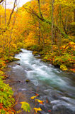 Autumn Colors of Oirase River Stock Photos