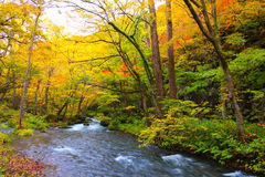 Autumn Colors of Oirase River Stock Photos