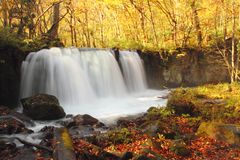 Autumn Colors of Oirase River Royalty Free Stock Photo