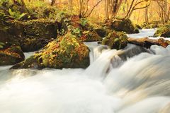 Autumn Colors of Oirase River Stock Photography