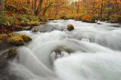 Autumn Colors of Oirase River Royalty Free Stock Image
