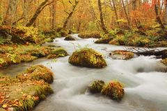 Autumn Colors of Oirase River Royalty Free Stock Photography