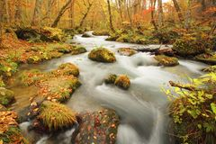 Autumn Colors of Oirase River Royalty Free Stock Photos