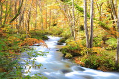 Autumn Colors of Oirase Stream Royalty Free Stock Images