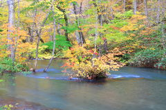 Autumn Colors of Oirase Stream Royalty Free Stock Image