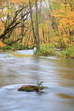 Autumn Colors of Oirase Stream Royalty Free Stock Photos
