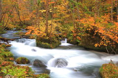 Autumn Colors of Oirase Stream Stock Photo