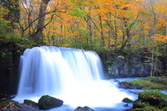 Autumn Colors of Oirase Stream Royalty Free Stock Photography