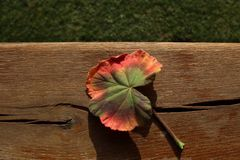 Autumn colors of one leaf Stock Images